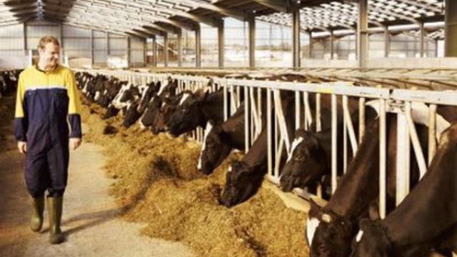 Nemački privrednici žele da ulažu u srpsko stočarstvo