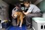 Hitna pomoć za životinje dostupna 24 časa
