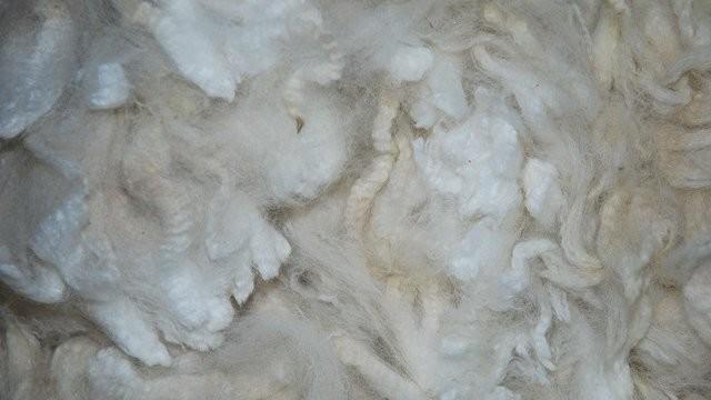 Srbija ne prerađuje vunu, samo je izvozi?