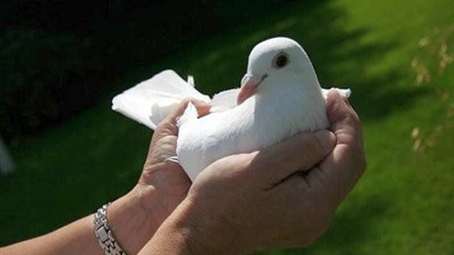 Bolje golub u ruci, nego vrabac na grani!