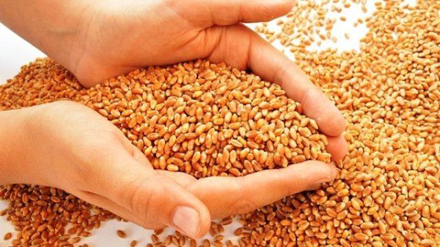 Srbija će imati dovoljno žita i za sebe i za izvoz