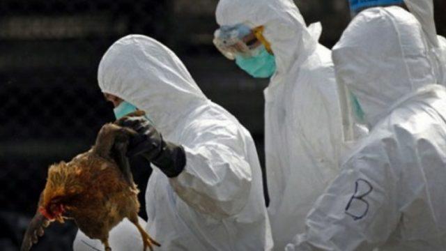 Zbog H5N8 Nemačka tamani 62.000 ćurki i patki