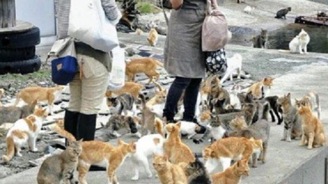 Nemački dm donirao hranu azilima za mačke