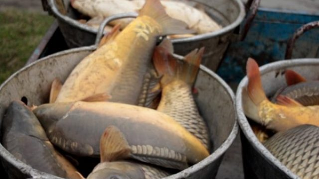 Riba neprodata, a trgovci ne spuštaju cenu